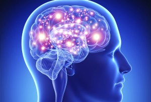 Noticias del mundo Descubren 97 superficies del cerebro nuevas