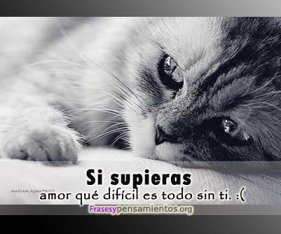Imagenes De Amor Tristes Con Frases Fotos De Amor