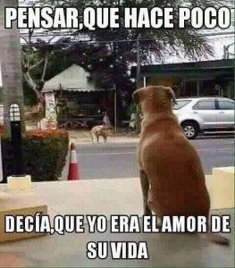 memes-de-amor-chistosos-8-263x300