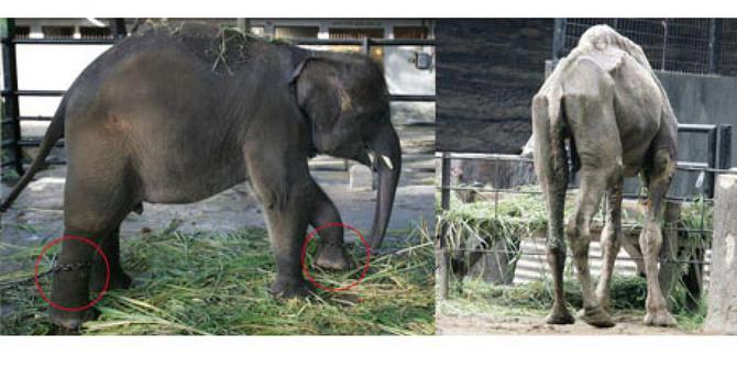 dunia-beri-gelar-kebun-binatang-surabaya-paling-sadis-bagi-hewan