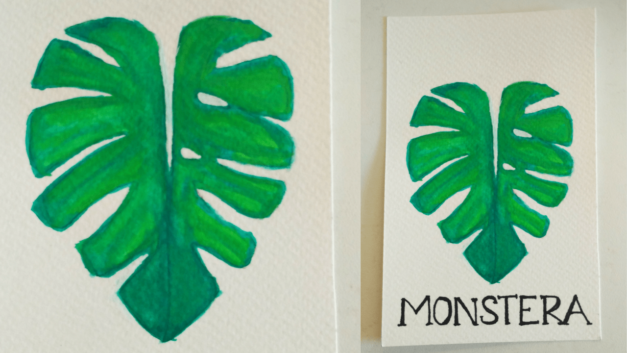 Step By Step Guide On How To Draw Paint Monstera Leaf Find the best free stock images about tropical leaves painting. to draw paint monstera leaf
