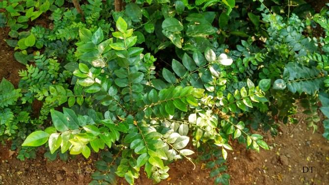 ammamma's garden.