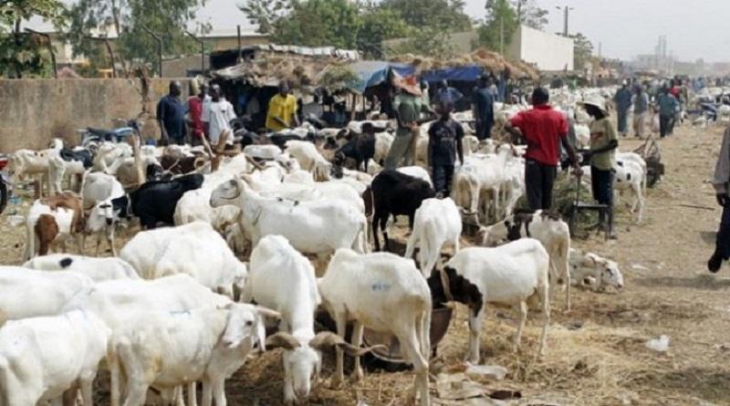 Tamba -Tabaski 2018 : le mouton vaut de l'or