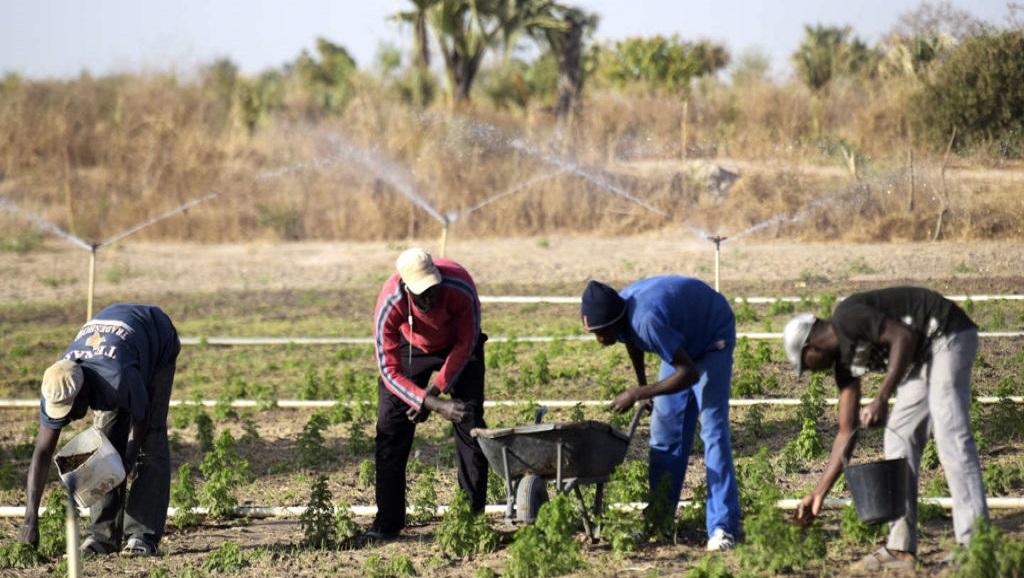 Sénégal, un pays qui vise l'autosuffisance alimentaire sans une recherche performante