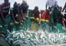 Sénégal-Gambie : Les accords de pêche suspendus