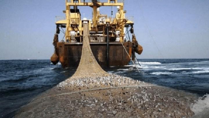Le pillage de nos ressources halieutiques se poursuivent dans l'insouciance des autorités