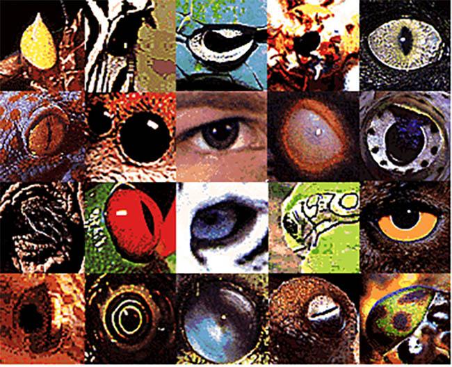 Eye Page Image