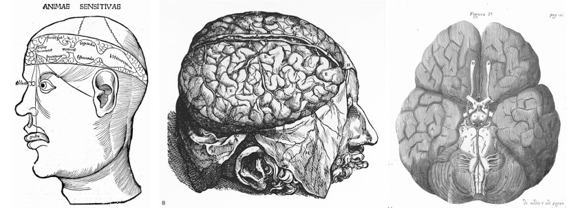 Three views of the brain