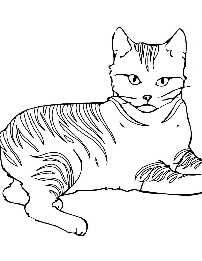 gato con rayas para colorear imágenes y fotos