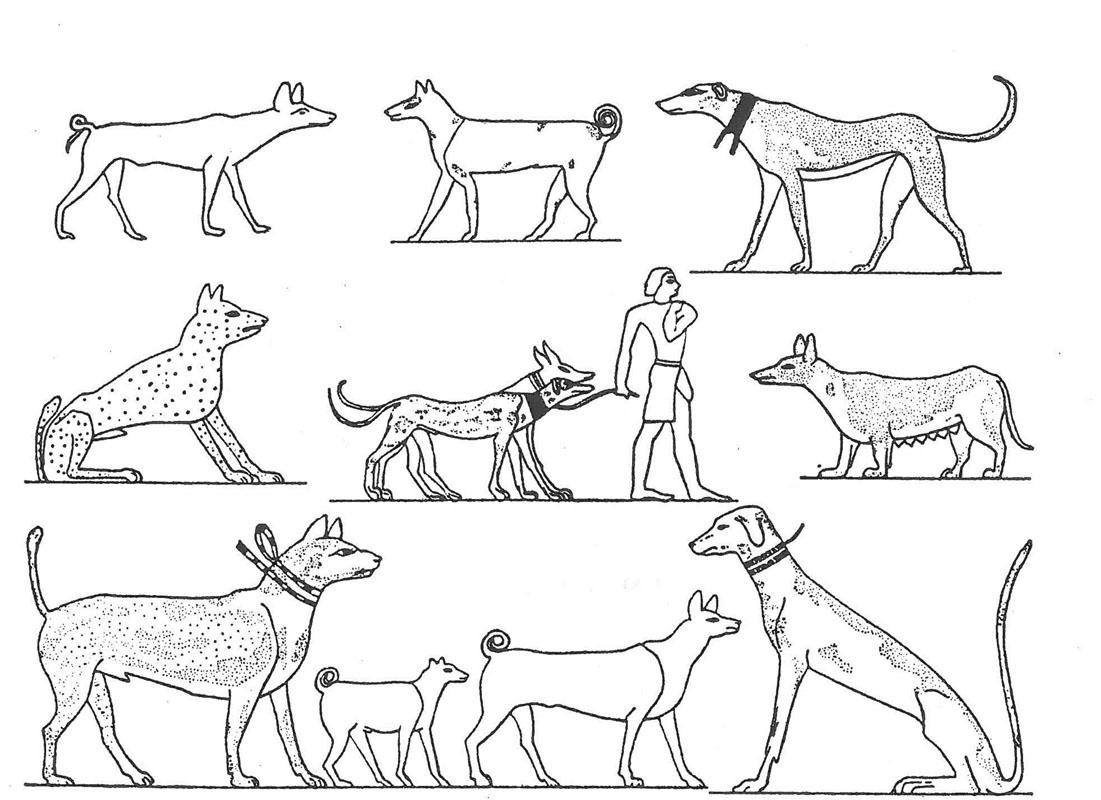 Hunting Dog Case