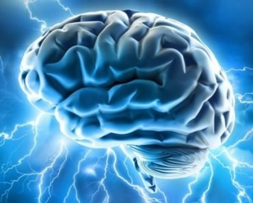 O tamanho do cérebro é importante?