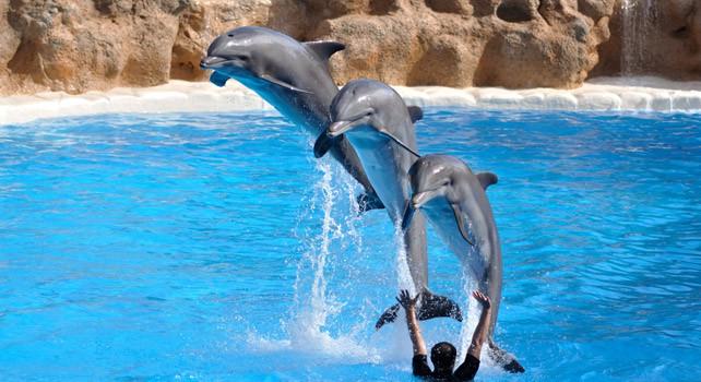 21 fatos impressionantes sobre golfinhos