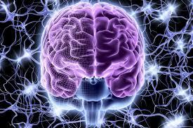 Partes Básicas do Cérebro e Suas Responsabilidades