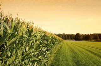 Quais Países Exportam Mais Alimentos?