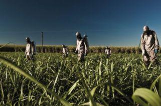 Principais Países Produtores De Cana-De-Açúcar