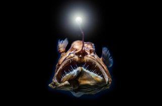 Como as Criaturas do Fundo do Mar Sobrevivem á Alta Pressão da Água?