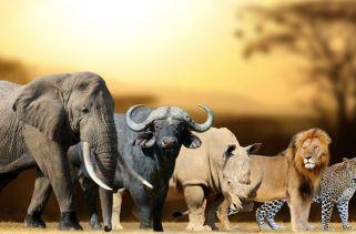 Quais São Os 5 Grandes Animais?