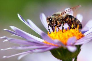 Por que as Abelhas são Importantes para Nós?