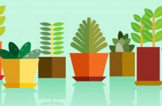 Como as plantas se reproduzem?