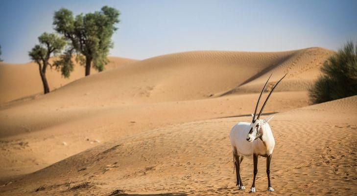 Animais Que Vivem No Deserto