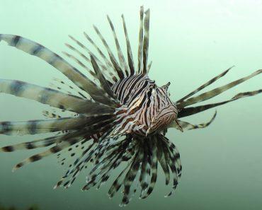 O que são espécies invasoras e por que são prejudiciais ao meio ambiente?