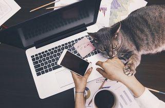 10 Trabalhos Que Você Pode Fazer No Conforto Da Sua Casa