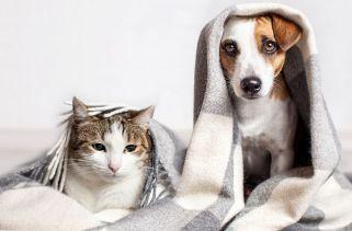 Melhores Maneiras De Cuidar De Animais De Estimação Durante O Coronavírus