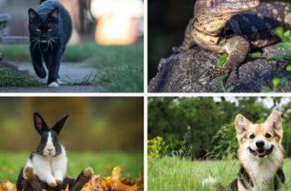 Quais são algumas superstições que envolvem animais?