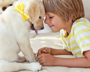 Como os cães sentem as emoções humanas?