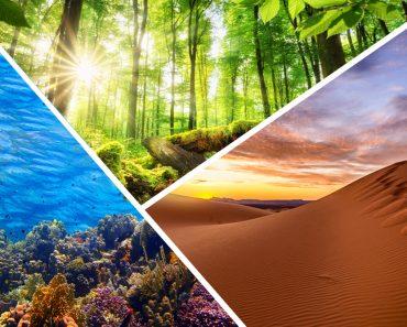 O que são serviços do ecossistema?