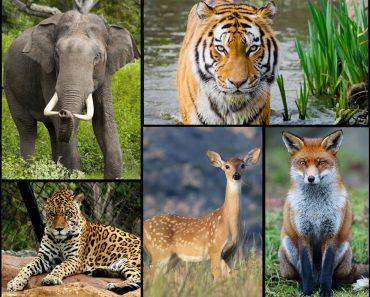 Alguns animais têm imunidade mais evoluída do que outros?