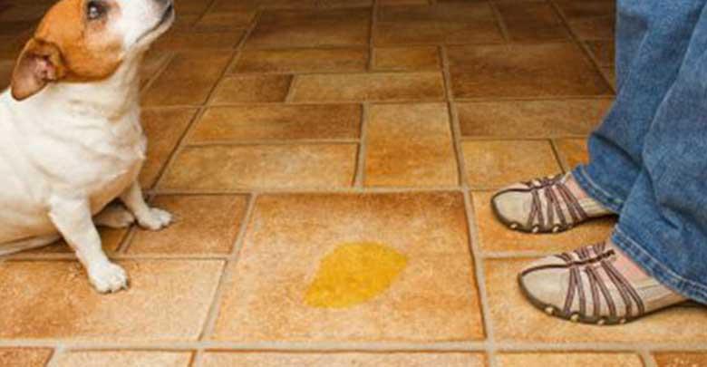 eliminar cheiro de urina