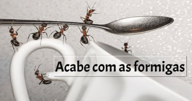 Formigas acabe com elas