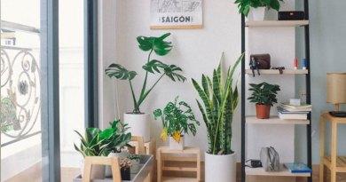 plantas que purificam o ar da casa