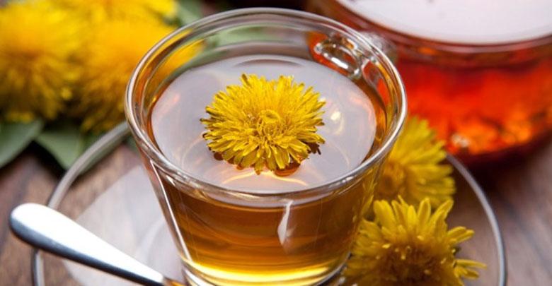 chá de dente de leão