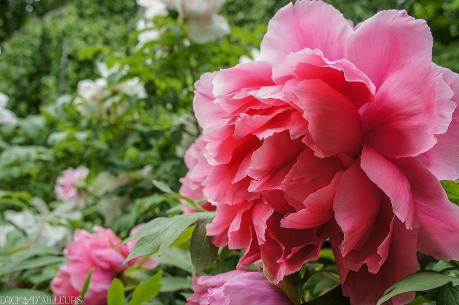 jardindesplantes04