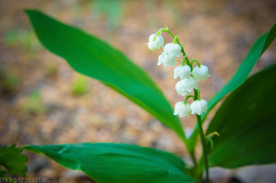 jardindesplantes05