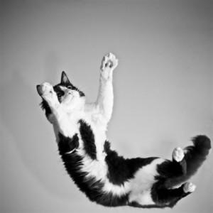 vallende-kat