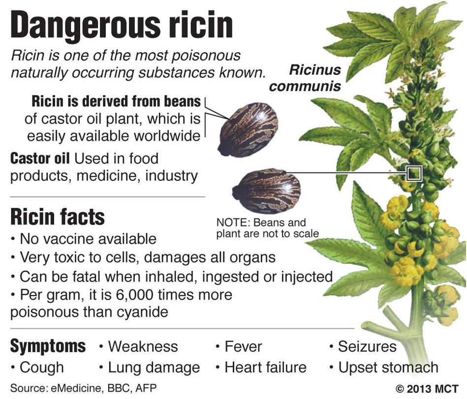 Image result for ricin