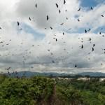 Birds, Guatemala City