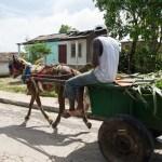 Carting Hurricane Debris, El Christo