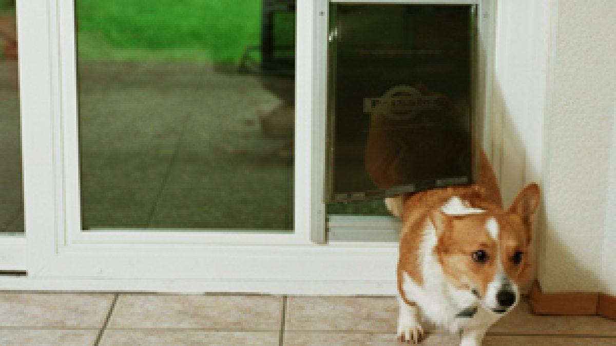 pet doors installation replacement
