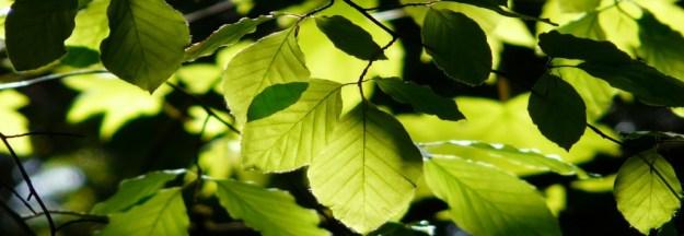 Blätter im Lichtspiel der Sonne.