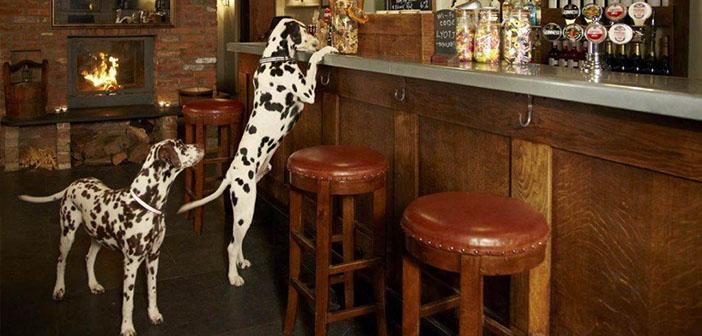 restaurants qui acceptent les chiens