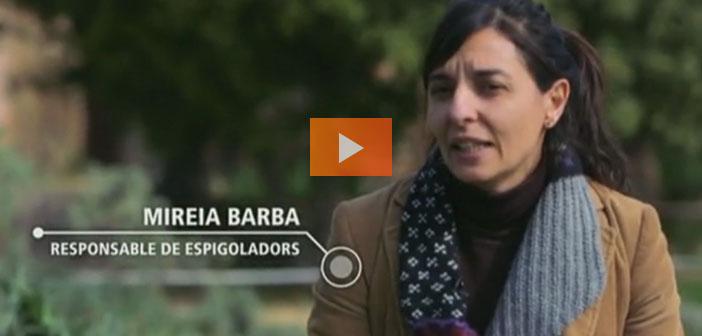 En Espagne, Espigoladors remis sur les fruits et légumes du marché à un prix réduit Imparfait