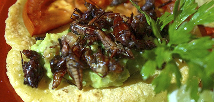 Cantina Machito and Grasshoppers