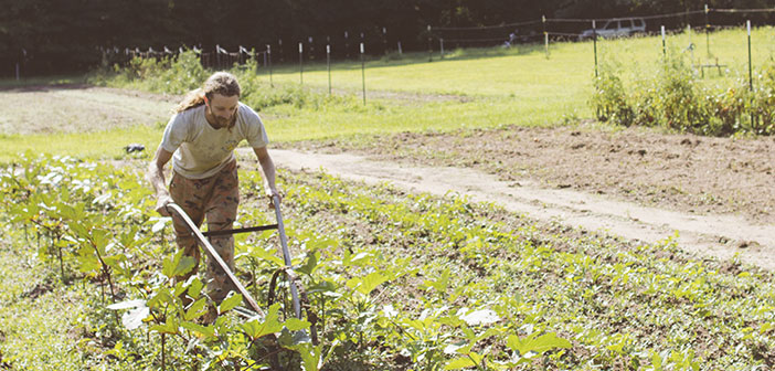 Si vous avez quelque chose restaurants végétaliens est ce lien avec les agriculteurs locaux offrent leurs produits biologiques et la sécurité d'avoir passé par un processus de culture 100% Naturel.