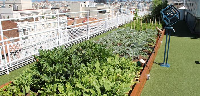 Wellington Hôtel et l'idée d'un jardin sur votre toit.