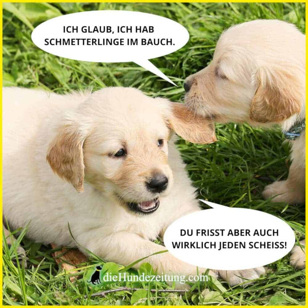 Lustige Spruche 31 Dinge Die Sich Hunde Denken Die Hundezeitung