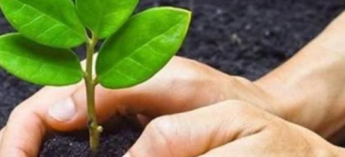 Crean dispositivo que 'avisa' cuando una planta requiere agua